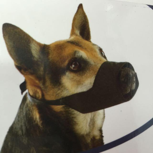 buster_dog_muzzle_1433748416_dc96b5b1.jpg